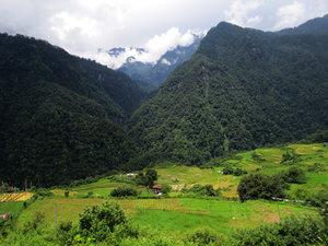 bosque montañas himalaya