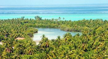 islas laquedivas flora