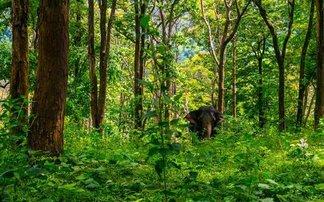 jungla india