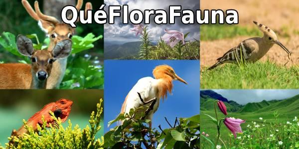 que flora fauna