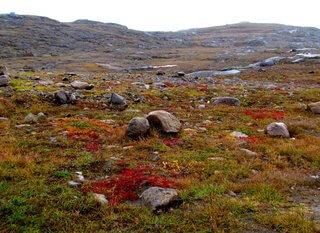 tundra artico canada