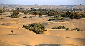 vegetacion desierto thar