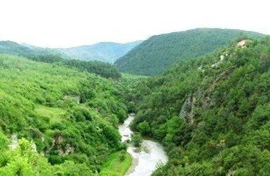 Un bosque en Yunnan