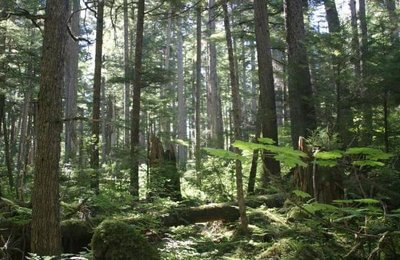 bosque nacional tongass alaska eeuu