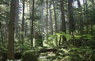 bosque nacional tongass alaska eeuu
