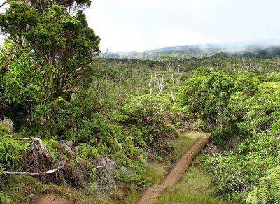 flora estados unidos jungla hawai