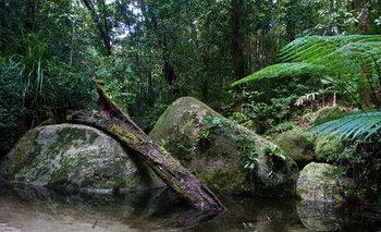 selva tropical queensland australia
