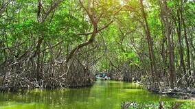 manglar ecosistema mexico